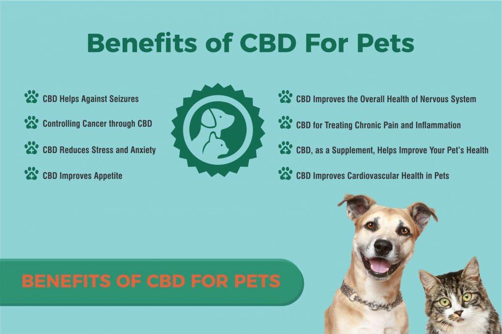 benifits of CBD for pets